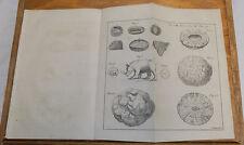 1756 Antique Print, Medical// RHINOCEROS STOMACH CONTENTS  //STONES