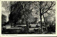 AHLEN Westfalen ~1950/60 Pflanzen, Baum Allee an der Weser-Promenade alte AK