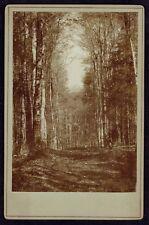 Cabinet Photo Landscape, Forest, Art Photo (2883)