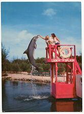 "Vintage ""TROPICAL PANORAMA JUNGLE AQUARIUM"" [FL] - Oversized Postcard"