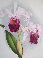 Linden Lindenia Large Print Orchid Laeliocattleya - 1888