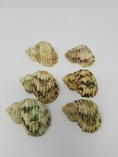 Set of 6 Sea Shell Conch Shell Napkin Rings Beach Decor