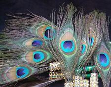 12 Peacock Feather Pen Favors ,Weddings,Sweet16,Quinceañera,Recuerdos/Bautizo