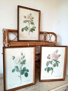 Trio Of Vintage Wood Frame Floral Botanical Book Plate Prints Of Roses