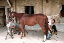 Horse Shoeing Horse Smithing Horses 30 Books CD ROM Horseshoe Shoeing Foot Iron