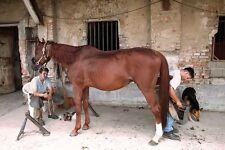 Horse Shoeing Horse Smithing Horses 30 Books CD ROM Horseshoe Shoeing Foot Iron