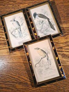 SUPERB SET OF 3 HAND COLOURED GEORGIAN BIRD STUDIES IN ORIGINAL FRAMES c1805