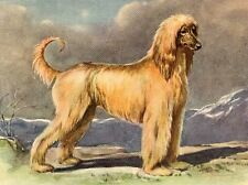 Afghan Hound - Dog Art Print - Megargee Matted