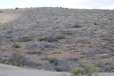 Arizona Residential Land Real Estate