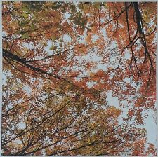 * VGC Nathan Secker Autumn Wood Trees Giclee Canvas Art Print 57 x 57cm RRP £135