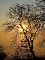 SUNRISE BACKLIGHT SILHOUETTE TREES PHOTO ART PRINT POSTER PICTURE BMP948A