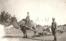 WWII Org German RP- Russian Middle East- Soviet Union- Civilian- Camel- Wagon