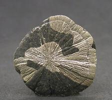 5679 Pyritsonne pyrite sun Sparta Illinois Fund 2009 USA