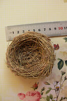 Grass Birds NEST 8-8.5cm Across x 2.7cm Deep - Decorative Use - Touch of Nature