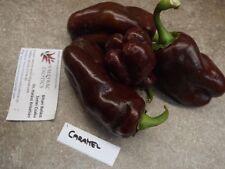 Karamell Paprika - 5+ Samen - Saatgut - Schokoladenfarbe und KNACKIG!