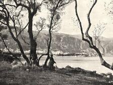 ALPES- MARITIMES. La Baie de Beaulieu Vue a Travers Les Oliviers 1900 print