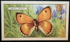 Small Heath   Butterfly   Vintage Illustrated Colour Card   VGC
