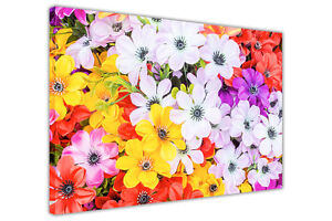 MULTI COLOURED FLOWERS CANVAS PICTURES WAL ART PRINTS HOME DECO FLORAL POSTERS