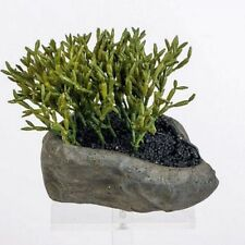 Kunstpflanze Kaktus im Steintopf Mod. B, 15 cm ideale Badezimmer Deko, Formano