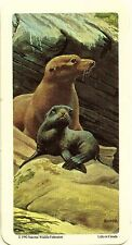 RED ROSE TEA CARD, SERIES: ANIMALS AND THEIR YOUNG, CALIFORNIA SEA-LION