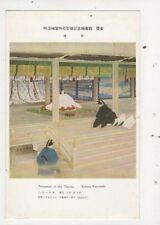 Ascension Of The Throne Kotora Kawasaki Japan Vintage Postcard 833a