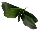 Artificial Butterfly Orchid Home Wedding Party Decoration Green Simulation Leaf