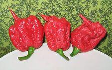 Capsicum Carolina Reaper Pepper HOT!!! Seeds!