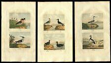 Three (3) 1808 Hand Colored Crane, Ruff, Birds Engravings Buffon Natural History