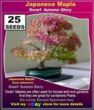 BONSAI SEEDS: Japanese Maple Dwarf- Autumn Glory*- 25x  SEEDS