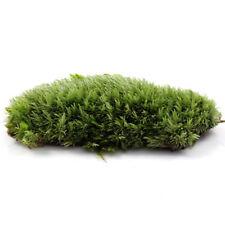 3X Artificial Plastic Underwater Plant Green Moss for Aquarium Fish Tank Decor