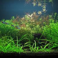 1000 Pcs Aquarium Tank Mixed Grass Seed  Water Aquatic Plant Seeds  AU