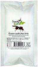 INSETTI commestibili commestibili Bug Bush Tucker QUEEN leafcutter FORMICHE 8G Crunchy Critters