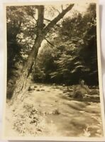 5x7 Vintage Old 1920's Photo of Woodlands Landscape Trees River by WRIGHT photog