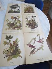 """18 Vintage  8x10 """" Audubon Birds Prints"""