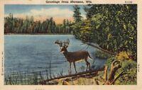 Postcard Greetings Shawano WI