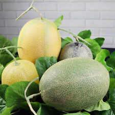 15  Hami Melon (Honey Kiss Melon)  non-GMO seeds