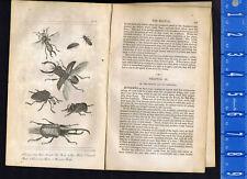 Earwig, Glow Worm, Beetles -Rhinoceros-Hercules-Stawg- 1830 Goldsmith Engraving
