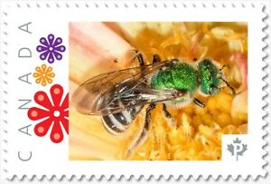 Green BEE = WASP = Insect = postage stamp MNH Canada 2018 [p18-09-06]