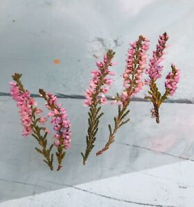 dried Pressed heather. 5 Pieces, Card Making, Jewellery Making