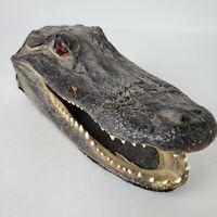 Vintage Real Taxidermy Gator Alligator Head 7 Inches Long