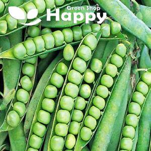 MAIN CROP - PEA - ALDERMAN - 100 SELECTED SEEDS - Pisum sativum - vegetable