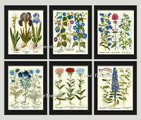 Unframed Blue Flowers Print Set of 6 Antique Pretty Home Wall Art Decor