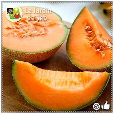50 Graines de Melon de Cavaillon Espagnol à chair rose - SEB-0027