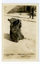 "Baby Bear Drinking Out of A Bottle RPPC ""Maine Pet"" Animal Photo ca. 1940s"