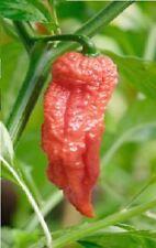 Vegetable - Pepper (Chilli) - Bih Jolokia - 10 Seeds