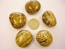 Aragonite, Golden Crystal Healing Tumblestone - Childhood Issues Anger Warmth