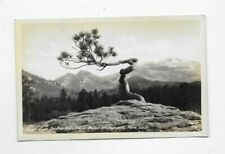 1932 RPPC Photo POSTCARD Lone Pine On High Drive Rocky Mt National Park R647