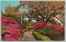 Baton Rouge Louisiana~Scenes In Early Springs~Vintage Postcard