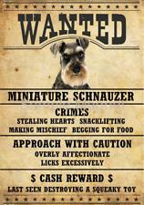 "Miniature Schnauzer Wanted Poster Fridge Dog Magnet Large 3.5"" X 5"""