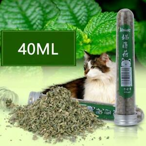 Frische Bio Getrocknete Katzenminze Nepeta cataria NEU Kräutermasse &Blüte